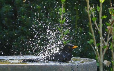 Stelle eine Vogeltränke auf
